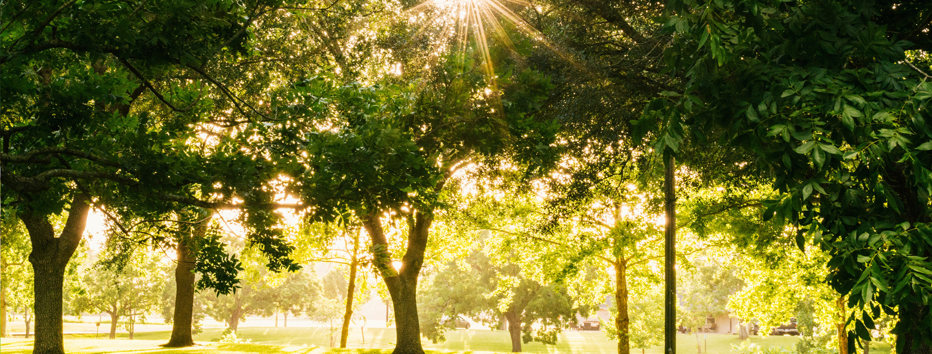 Why Fertilize Trees and Shrubs