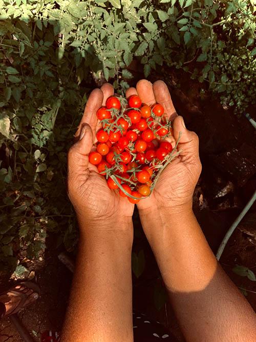 Organic Fertilizer a Natural Die