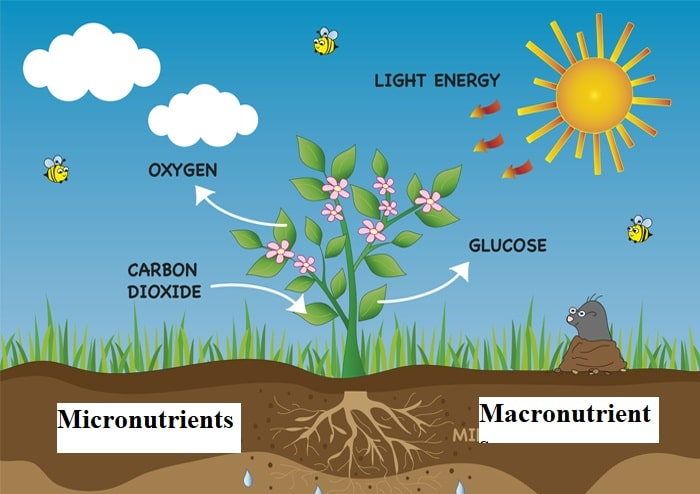 Micronutrients are plant nutrients essential for optimum plant growth